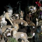 Taxidermy Shop in Damascus, Syria