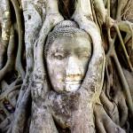 Buddha Statue Entangled in a Kapok Tree, Ayutthaya, Thailand