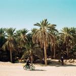 Date Palm Oasis in Nefta, Tunisia