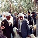 Livestock Market in Douz, Tunisia