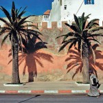 Palms and Shadows in Essaouira
