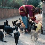Woman With Feral Cats