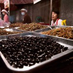 Fried Insect Snacks at the Night Market, Lamphang, Thailand