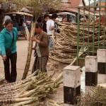 Sugarcane For Sale in Luang Prabang, Laos