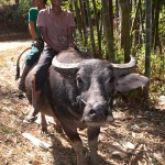 Boys Riding On A Water Buffalo in Shan State, Myanmar