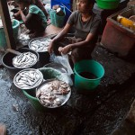 Man Selling Fish in Sittwe Market, Myanmar